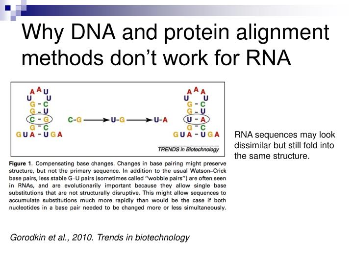 Why DNA and protein alignment methods don't work for RNA