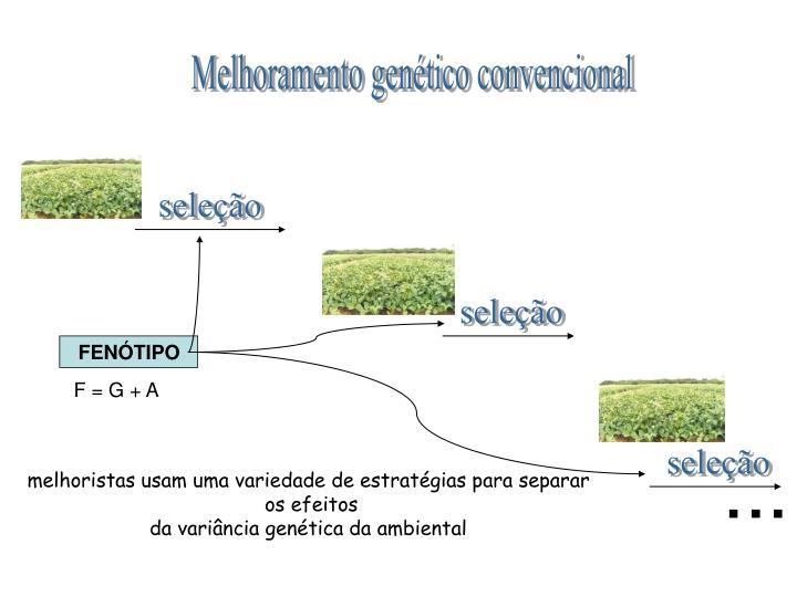 Melhoramento genético convencional