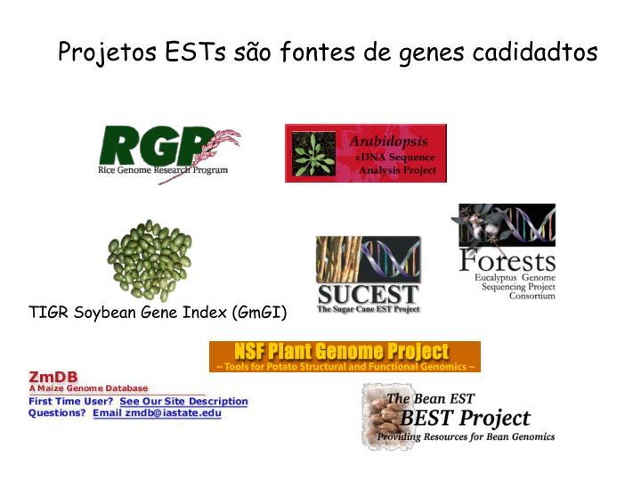 Projetos ESTs são fontes de genes cadidadtos