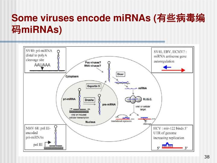 Some viruses encode miRNAs (