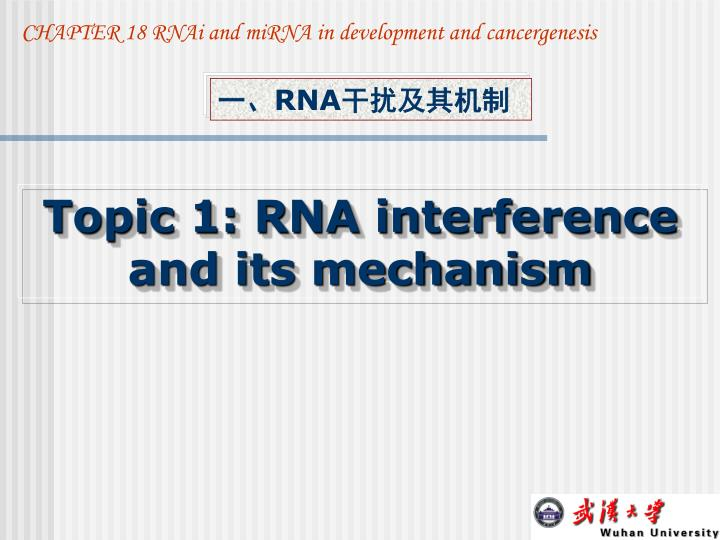 CHAPTER 18 RNAi and miRNA in development and cancergenesis