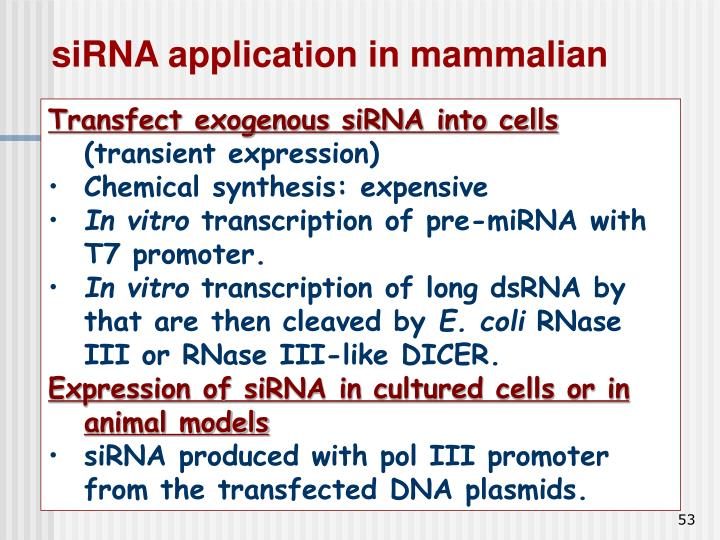 siRNA application in mammalian