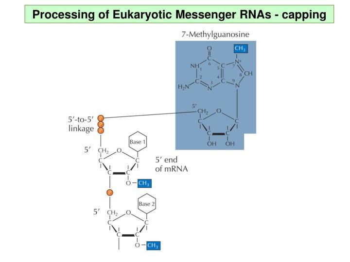 Processing of Eukaryotic Messenger RNAs - capping