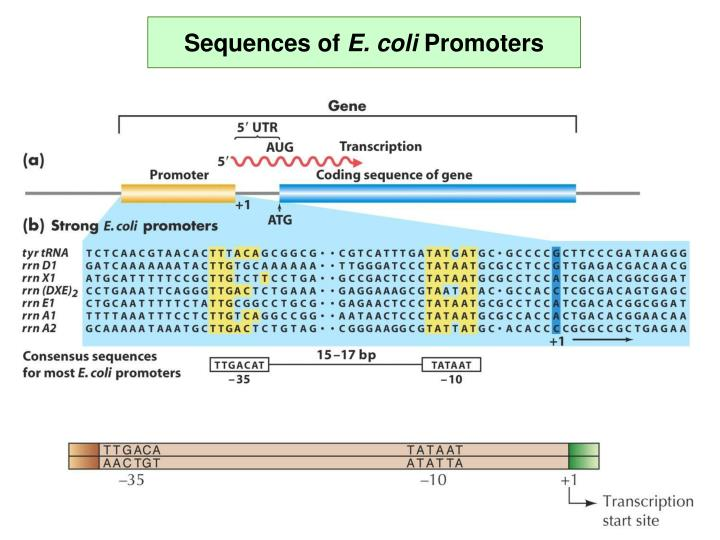 Sequences of