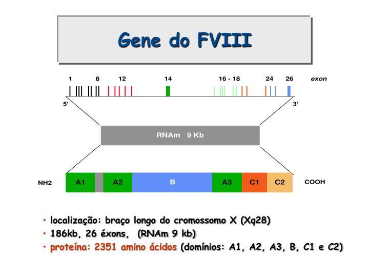 Gene do FVIII