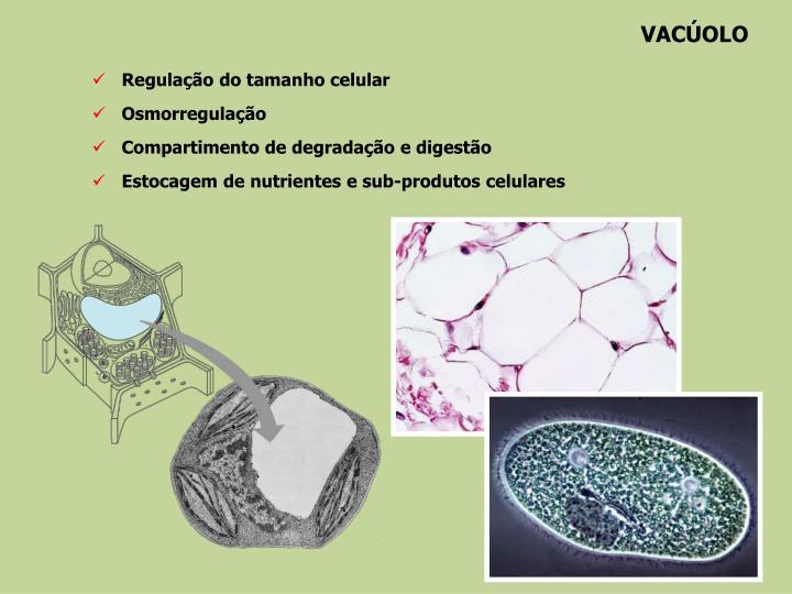 VACÚOLO