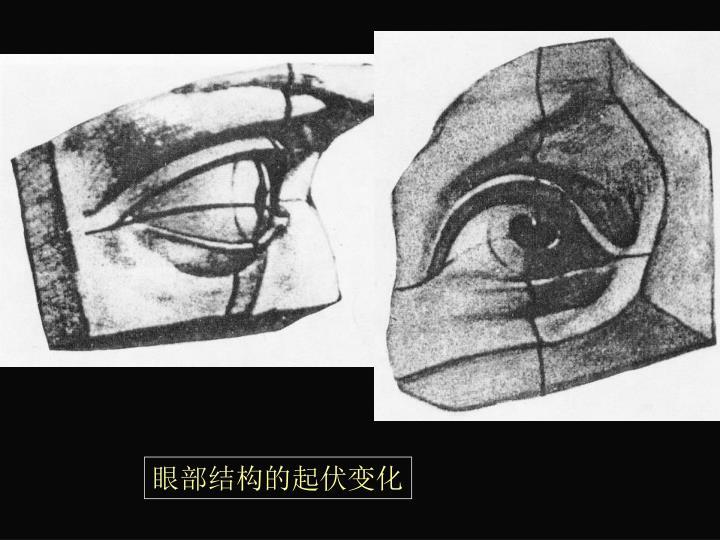 眼部结构的起伏变化