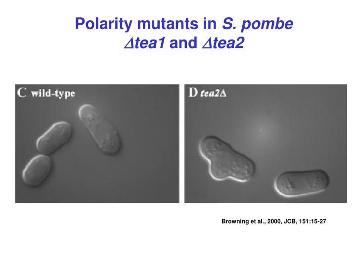 Polarity mutants in