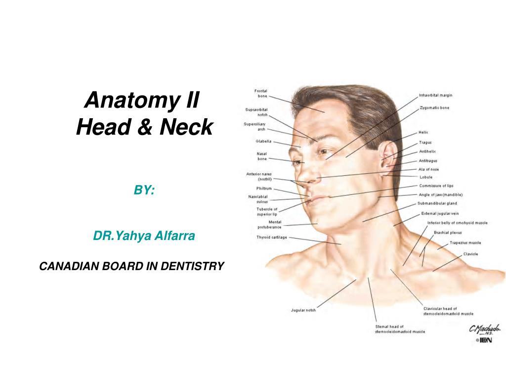 PPT - Anatomy II Head & Neck BY: DR.Yahya Alfarra CANADIAN BOARD IN ...