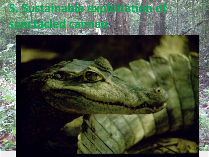 5. Sustainable exploitation of spectacled caiman