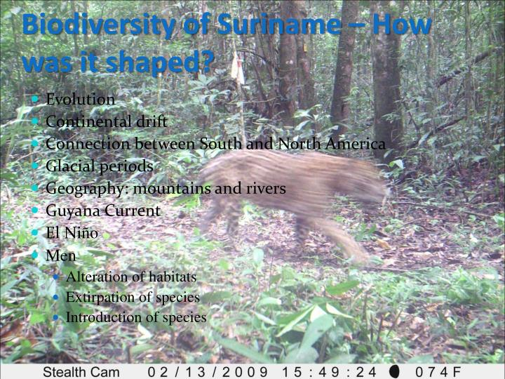 Biodiversity of Suriname – How was it shaped?