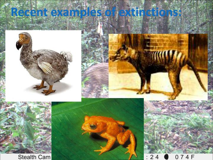 Recent examples of extinctions: