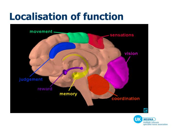 Localisation of function