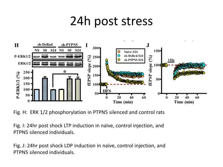 24h post stress