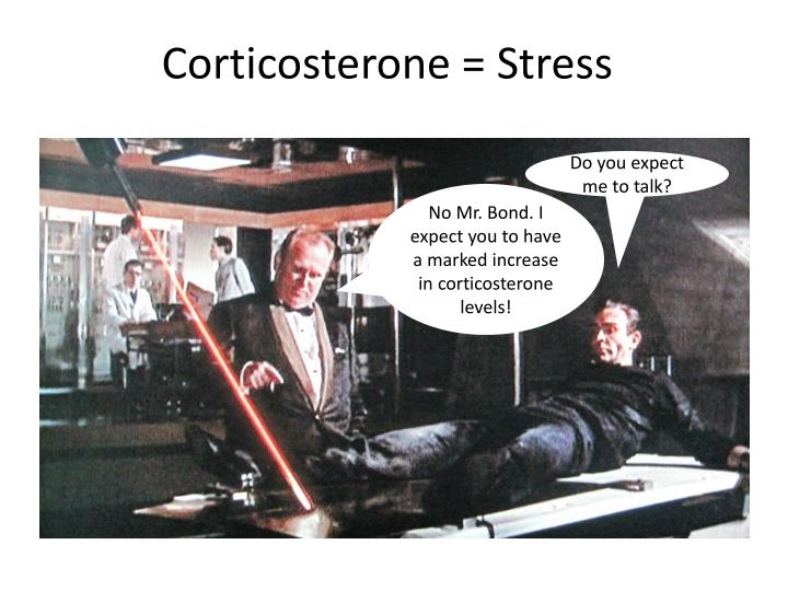 Corticosterone = Stress