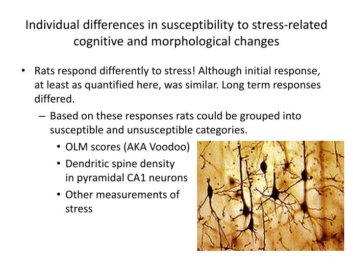 Individual differences in susceptibility to stress-related cognitive and morphological changes