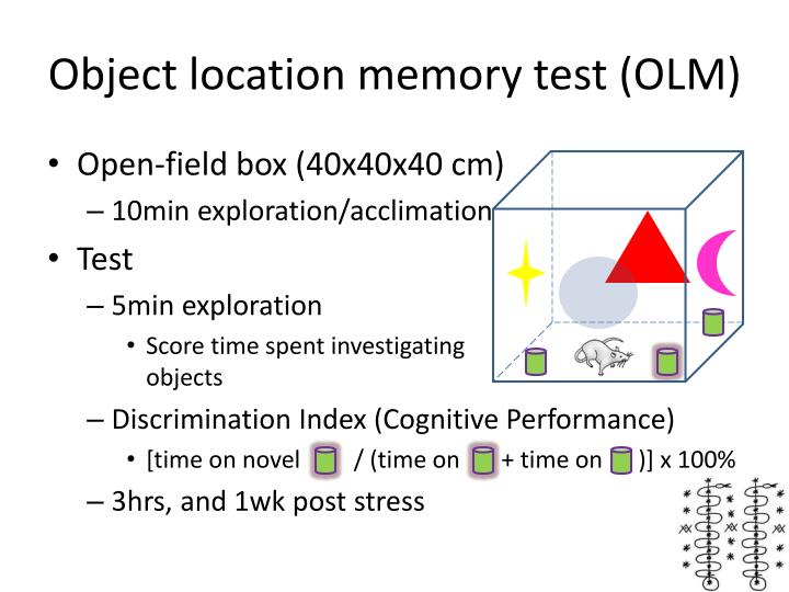Object location memory test (OLM)