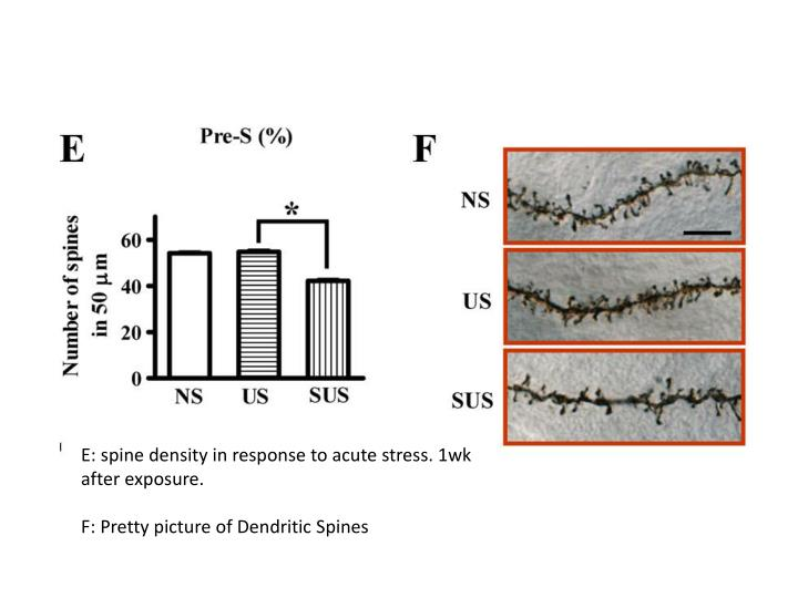 E: spine density in response to acute stress. 1wk after exposure.