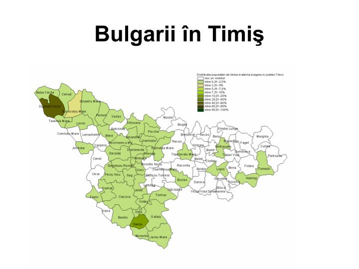 Bulgarii în Timiş