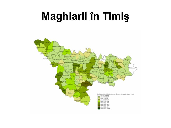 Maghiarii în Timiş