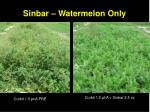 sinbar watermelon only
