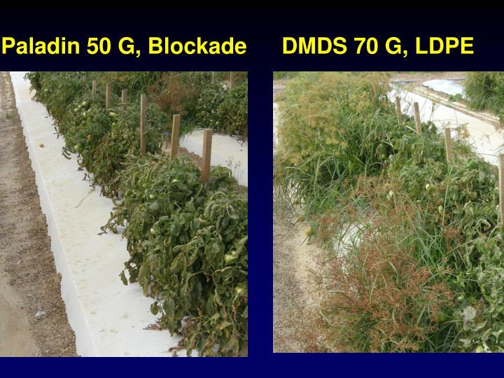 Paladin 50 G, Blockade
