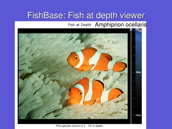 FishBase: Fish at depth viewer