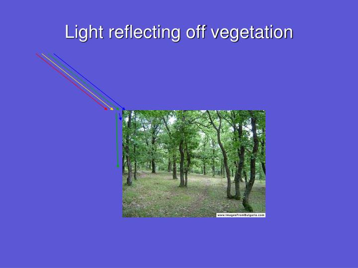 Light reflecting off vegetation