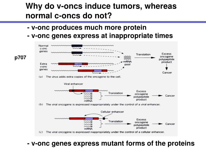 Why do v-oncs induce tumors, whereas normal c-oncs do not?