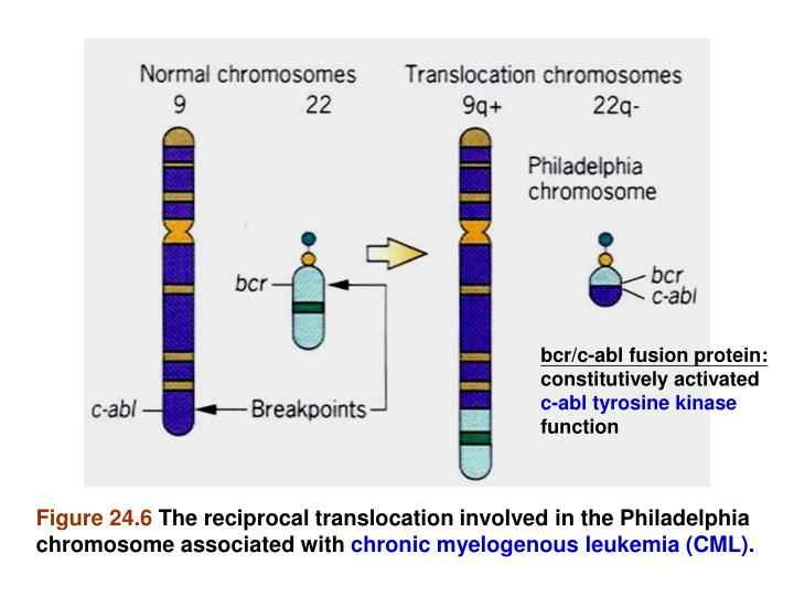 bcr/c-abl fusion protein: