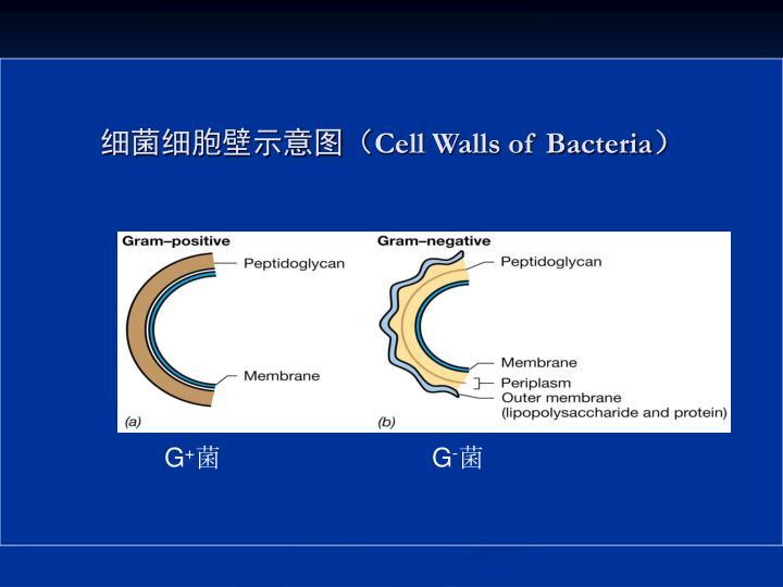 细菌细胞壁示意图(