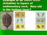 example of an index fossil trilobite in layers of sedimentary rock how old is the bottom layer