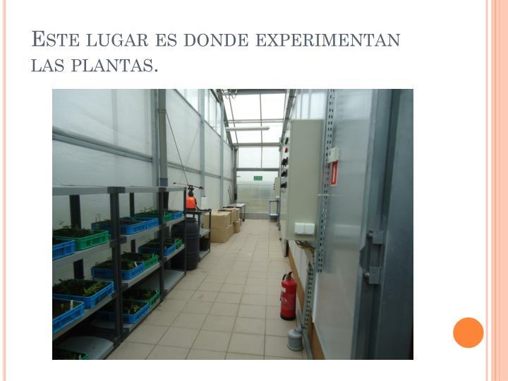 Este lugar es donde experimentan las plantas.