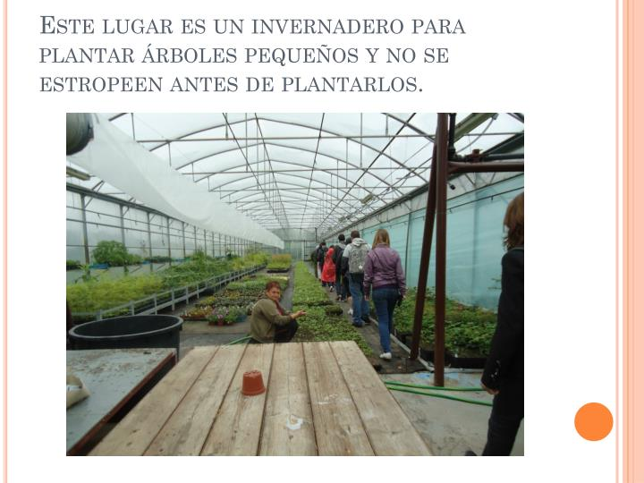 Este lugar es un invernadero para plantar árboles pequeños y no se estropeen antes de plantarlos.