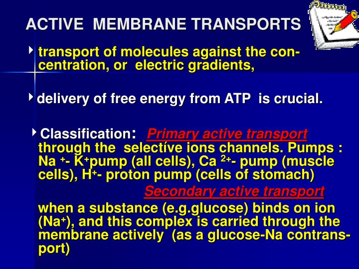 active membrane transports n.