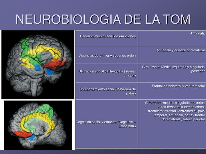 NEUROBIOLOGIA DE LA TOM