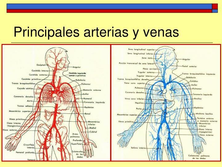 PPT - Tema 5: AnatomÃa y fisiologÃa del aparato circulatorio ...