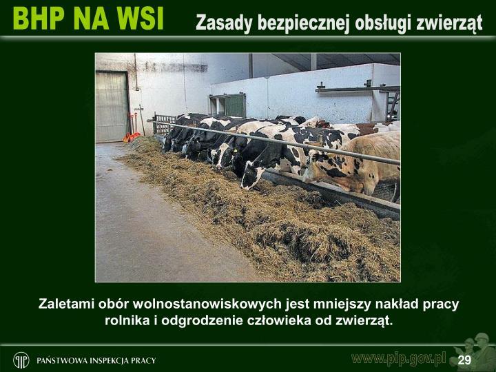 Zaletami obór wolnostanowiskowych jest mniejszy nakład pracy rolnika i odgrodzenie człowieka od zwierząt.