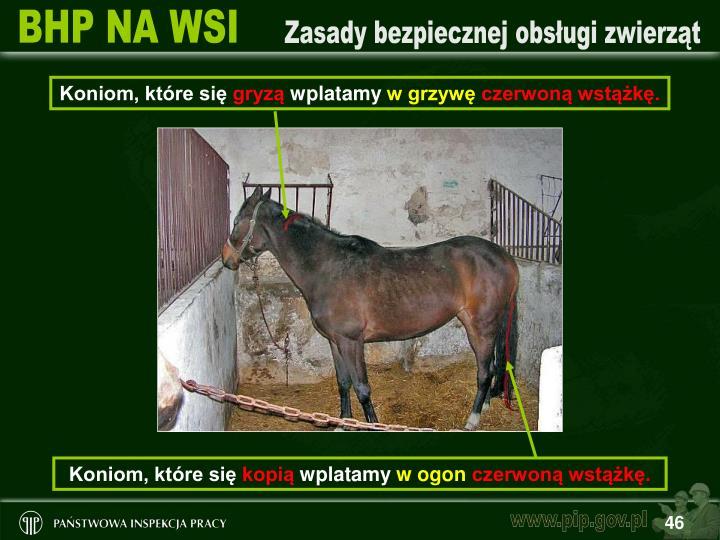 Koniom, które się
