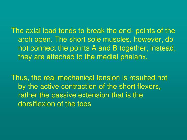 The axial load tends to break the end- points of the arch open. The short sole muscles, however, do not connect the points A and B together, instead, they are attached to the medial phalanx