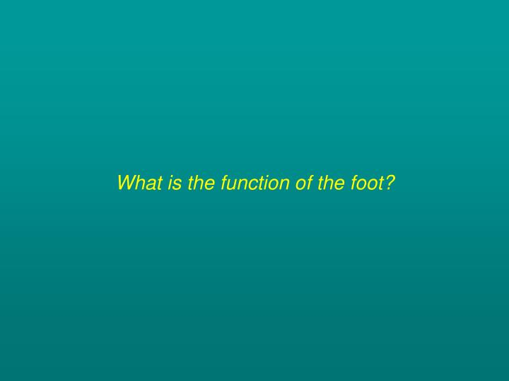 What is the function of the foot