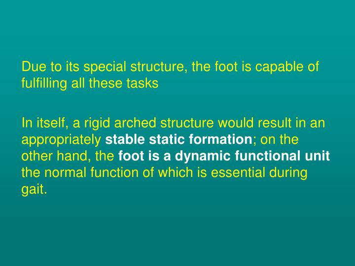 Due to its special structure, the foot is capable of fulfilling all these tasks