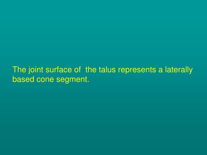 The joint surface of  the talus represents a laterally based cone segment.