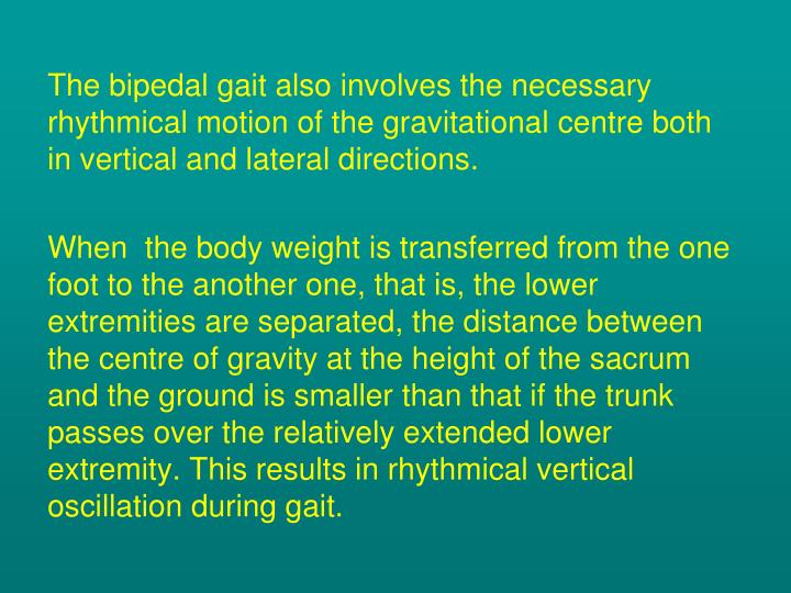 The bipedal gait also involves the necessary rhythmical motion of the gravitational