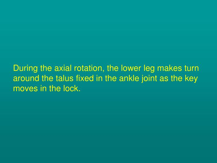 During the axial rotation, the lower leg makes turn around the talus fixed in the ankle joint as the key moves in the lock