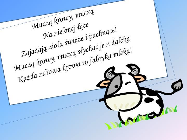 Muczą krowy, muczą