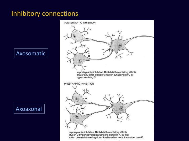Inhibitory connections