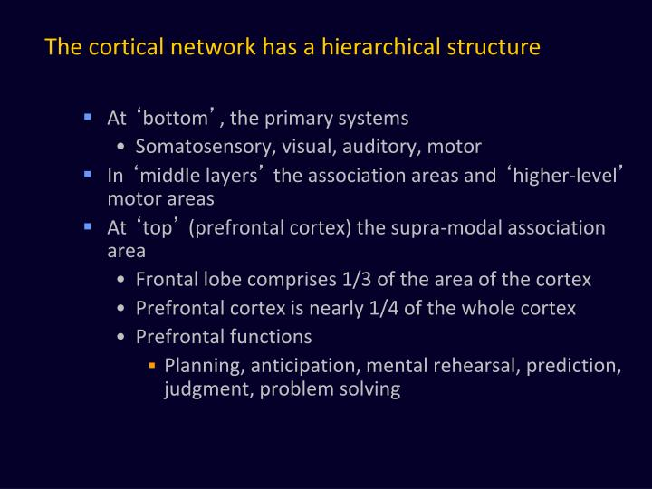 The cortical network has a hierarchical structure