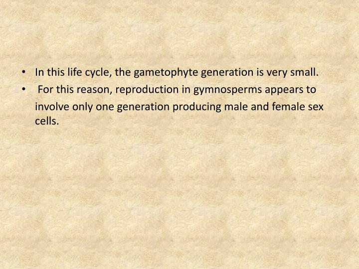In this life cycle, the gametophyte generation is very small.