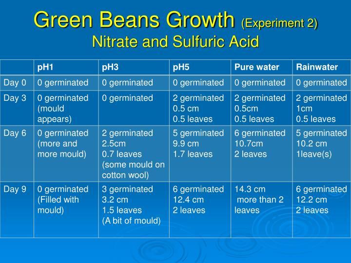 Green Beans Growth
